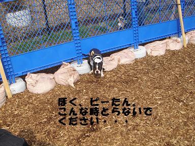 f0110199_2275427.jpg