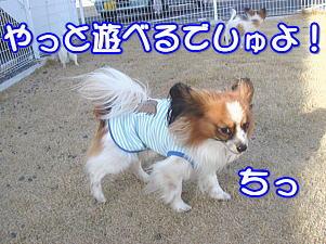 f0011845_157985.jpg