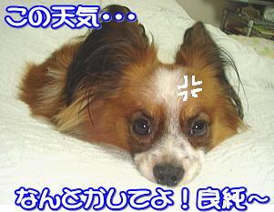 f0011845_321076.jpg