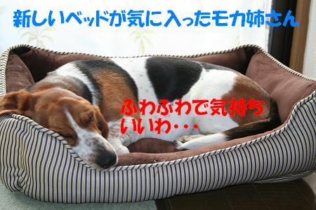 f0121712_10274322.jpg