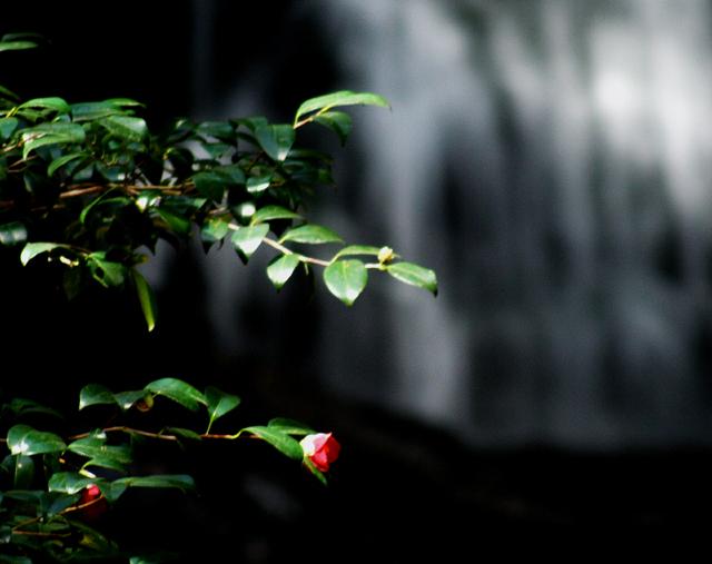 春の滝 ~木漏れ日を浴びて~_d0074828_2284912.jpg