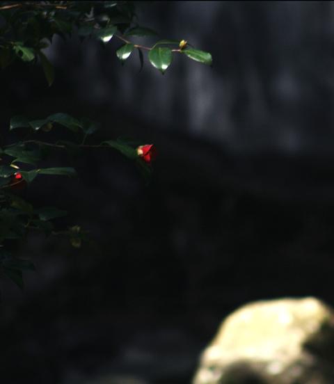 春の滝 ~木漏れ日を浴びて~_d0074828_229833.jpg