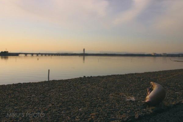 ある日の浜名湖夕景_c0037519_024815.jpg