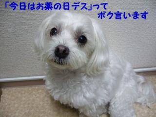 f0005727_1644141.jpg