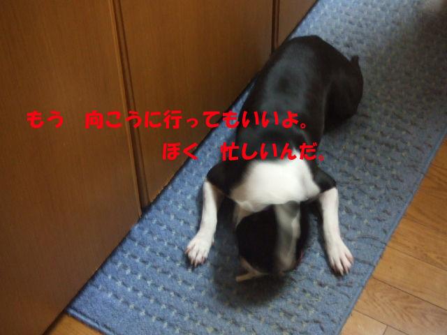 f0059334_1095495.jpg