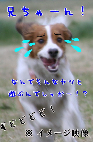 d0013149_15515710.jpg