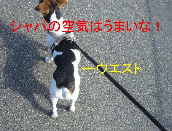 f0053952_10371674.jpg