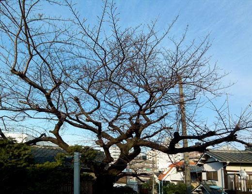 桜見の家 借景_b0015157_23571098.jpg