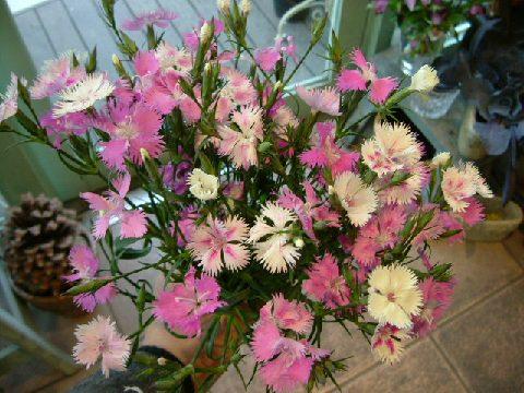 オークリーフ(似て非なる花)_f0049672_16345546.jpg