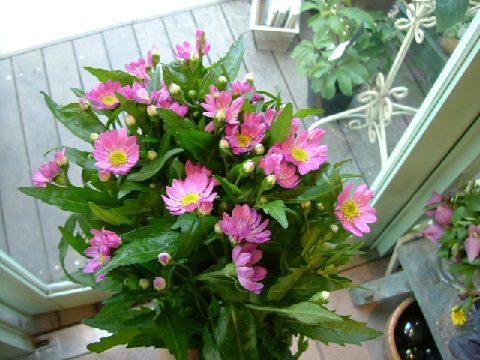 オークリーフ(似て非なる花)_f0049672_1635660.jpg
