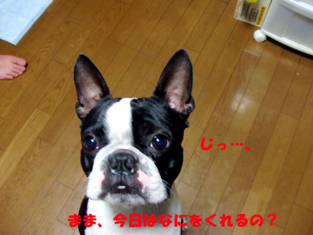 f0059334_916466.jpg