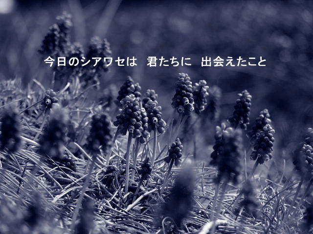 f0099535_1756591.jpg