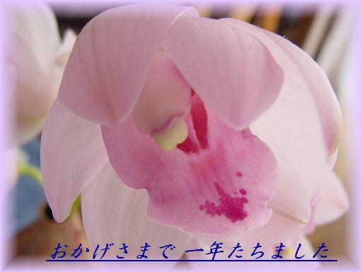 f0088197_105150.jpg