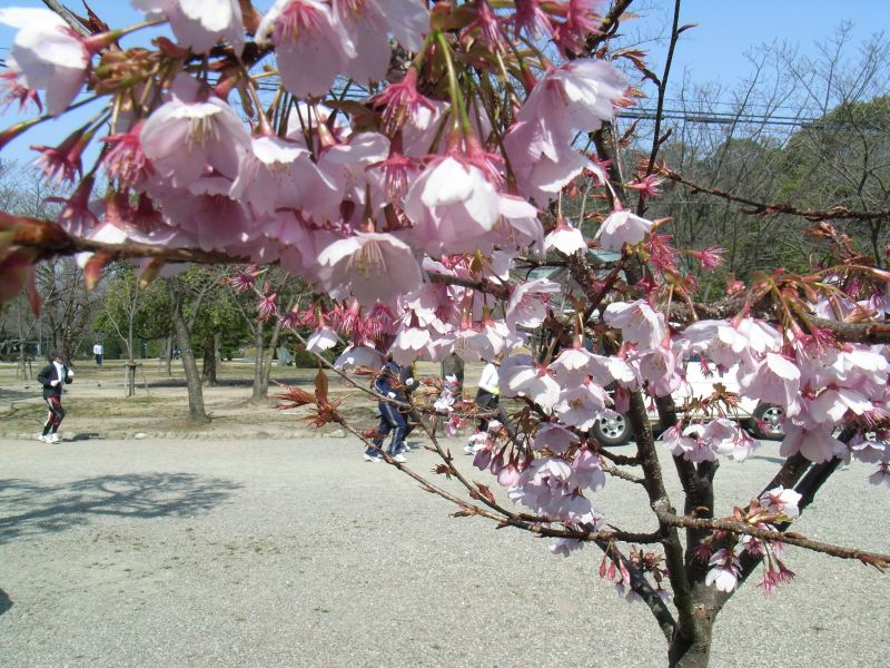 徳島で見つけた春_c0025115_21345163.jpg