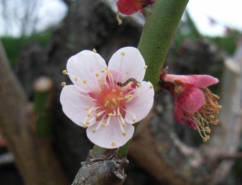 徳島で見つけた春_c0025115_21361188.jpg