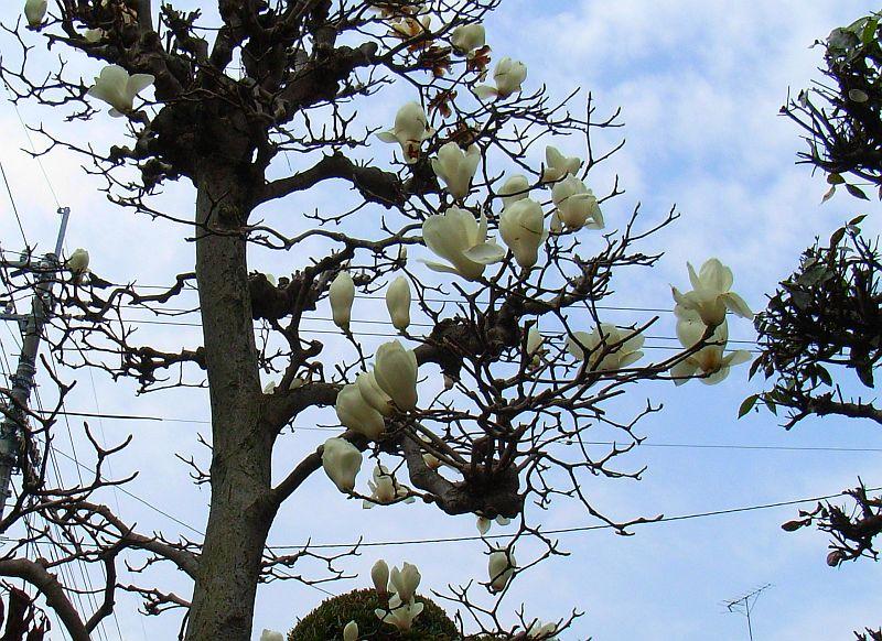 徳島で見つけた春_c0025115_21371389.jpg