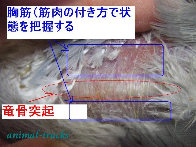 d0035420_024440.jpg
