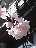 13年ぶりに福岡に行きました。_d0046025_2231058.jpg