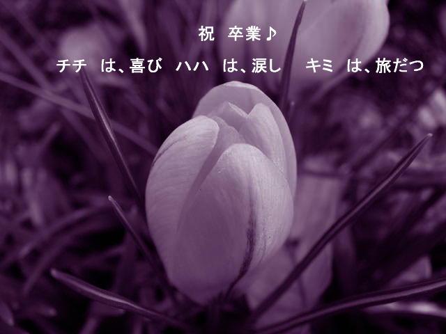 f0099535_047319.jpg