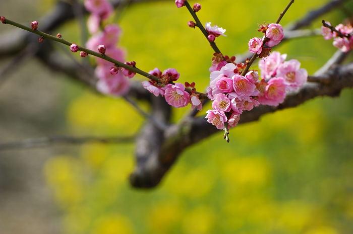 春うらうら_e0056449_19163656.jpg