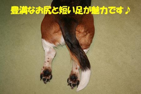 f0121712_8514919.jpg