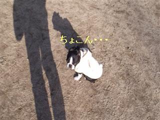 f0133316_22592035.jpg