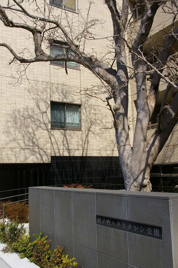 ピンチ!旧小泉邸のハクモクレン(2007・3・10)_c0014967_644672.jpg
