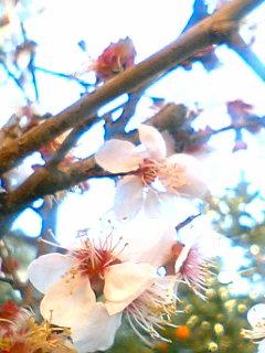 桜の旅_d0095471_23461227.jpg
