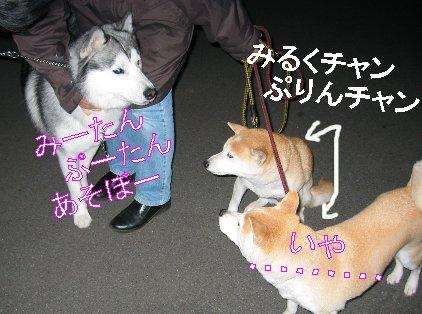 f0112407_1629086.jpg