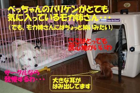 f0121712_10294571.jpg