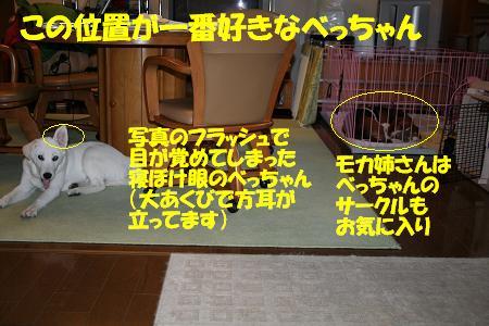f0121712_10295318.jpg