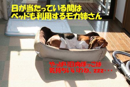 f0121712_1030918.jpg