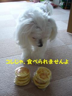 f0005727_1664340.jpg
