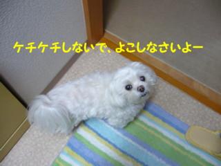 f0005727_168537.jpg