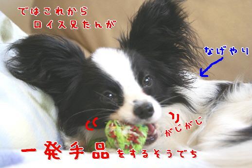 d0013149_959342.jpg
