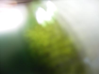 d0049553_062771.jpg