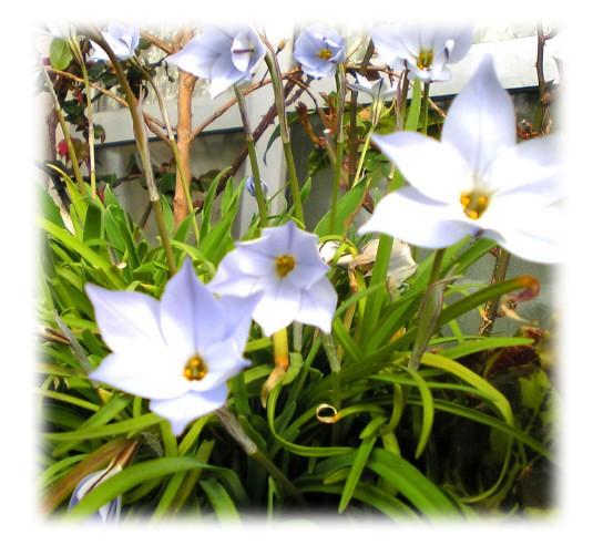 春の足おと。_e0116563_196118.jpg