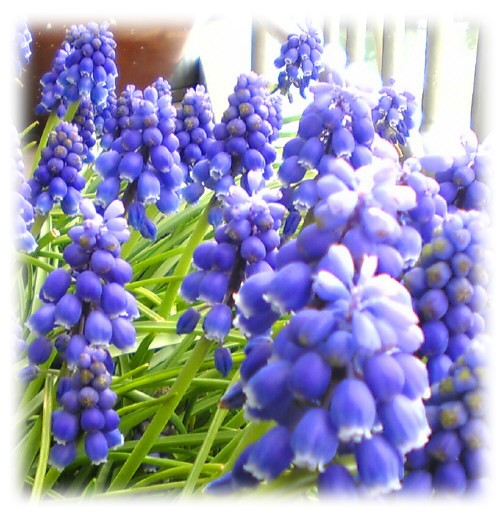春の足おと。_e0116563_196291.jpg