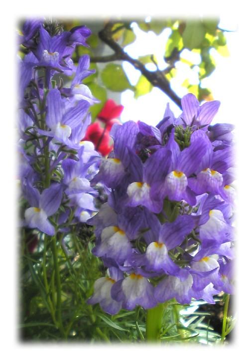 春の足おと。_e0116563_1965211.jpg