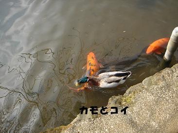 f0110199_167661.jpg