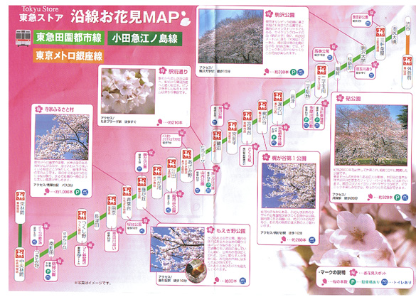 寒い!けれど桜の開花が気になる、今日このごろです!_f0094800_2395161.jpg