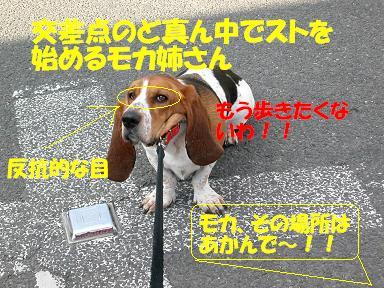 f0121712_9572211.jpg