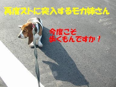 f0121712_957308.jpg