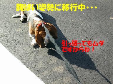 f0121712_9573779.jpg