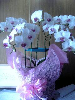 「蘭」 の花♪_f0099147_2134365.jpg