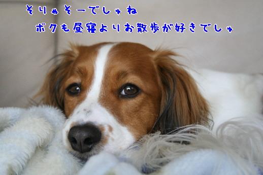 d0013149_10524470.jpg