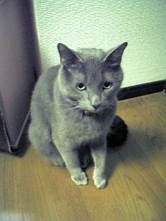 2007年3月13日 猫ちゃん_c0068174_23345548.jpg