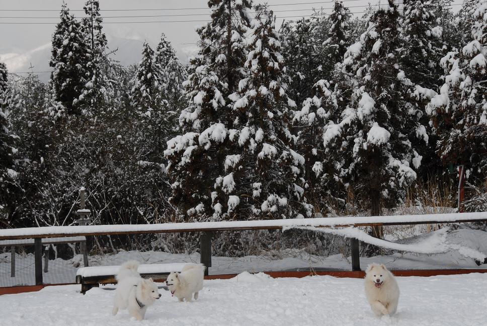 雪解け&大雪オフ  大雪編_a0049296_18334177.jpg