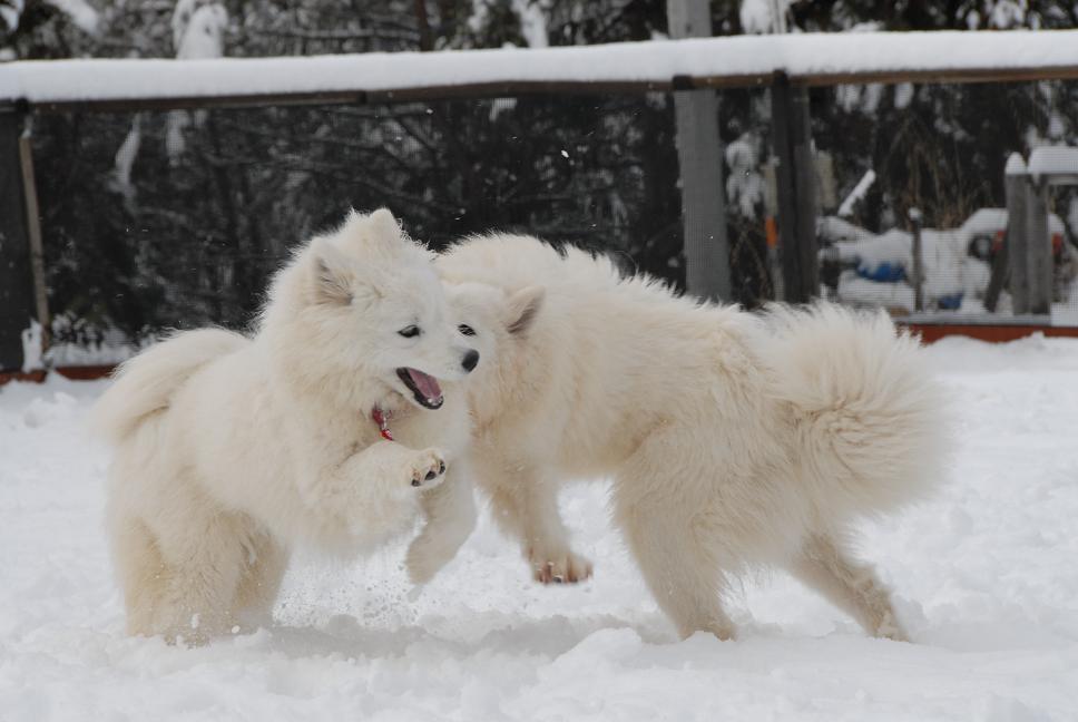 雪解け&大雪オフ  大雪編_a0049296_5265717.jpg