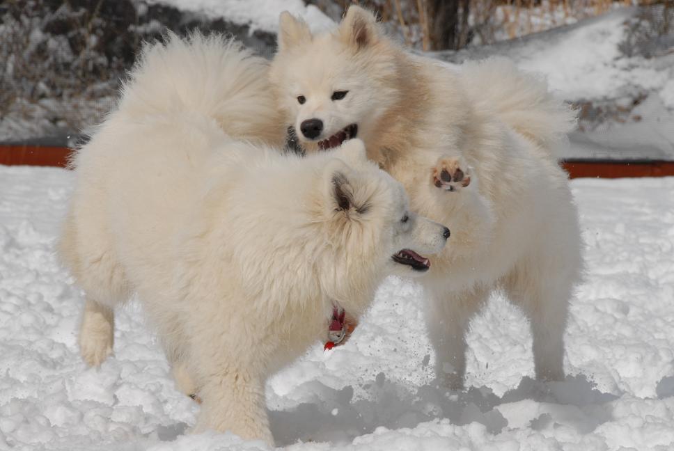 雪解け&大雪オフ  大雪編_a0049296_526899.jpg